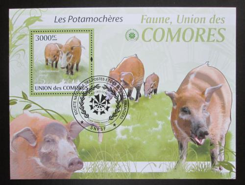 Poštovní známka Komory 2009 Štìtkoun africký Mi# Block 527 Kat 15€