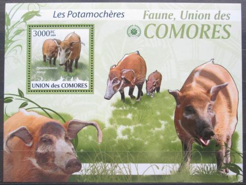 Poštovní známka Komory 2009 Štìtkoun africký Mi# 2465 Kat 15€