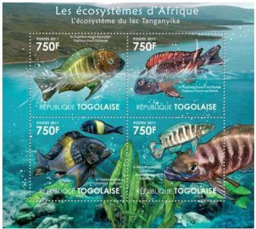 Poštovní známky Togo 2011 Ryby jezera Tanganyika Mi# 4181-84 Kat 12€