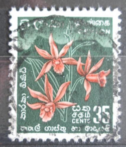 Poštovní známka Cejlon 1954 Orchidej Mi# 270 II