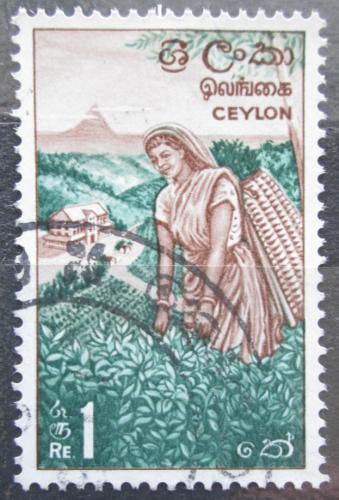 Poštovní známka Cejlon 1964 Sbìr èaje Mi# 329