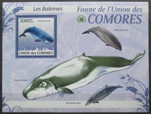 Poštovní známka Komory 2009 Velryby Mi# 2469 Kat 15€